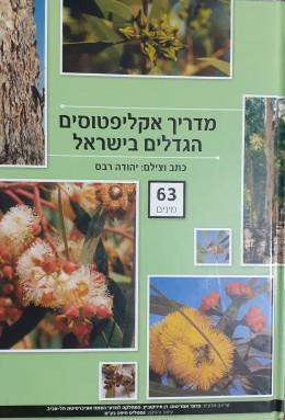 מדריך אקליפטוסים הגדלים בישראל