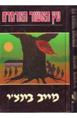 עץ האשור האדמדם/מייב בינצ'י